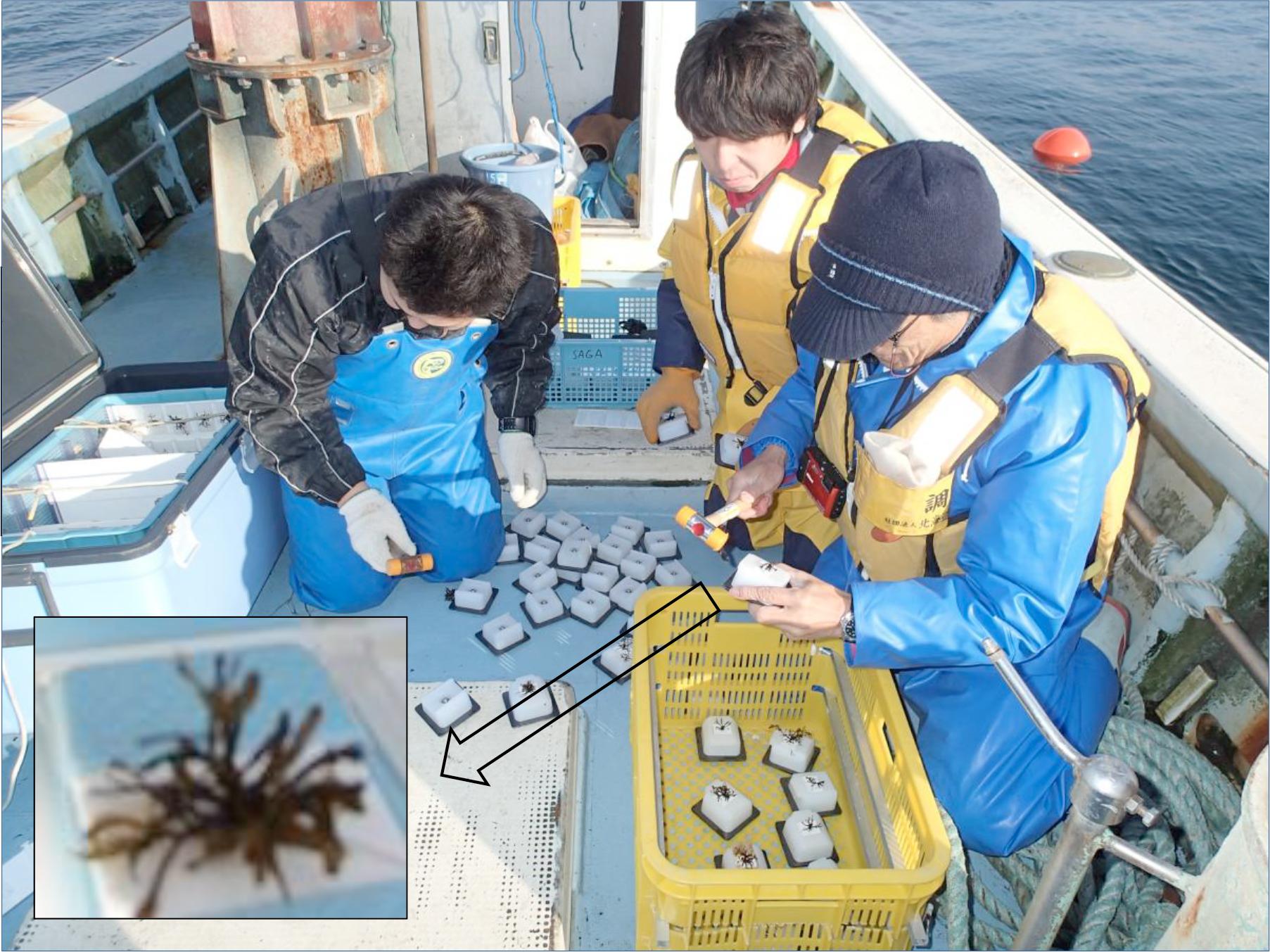 雲町漁業協同組合環境・生態系保全活動組織 熊石地区藻場保全活動組織