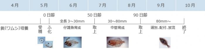 魚種別種苗生産状況「ヒラメ」表